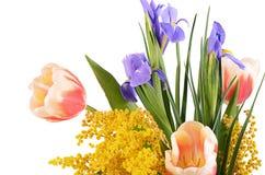 De lentebloemen op witte achtergrond worden geïsoleerd die Royalty-vrije Stock Afbeeldingen