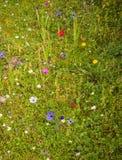 De lentebloemen in Oude Olimpia, de Peloponnesus, Griekenland royalty-vrije stock foto