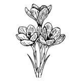 De lentebloemen - schets Stock Afbeeldingen