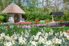 De lentebloemen in Tulip Garden Keukenhof, Lisse, Nederland Royalty-vrije Stock Fotografie