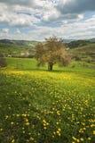 De lentebloemen van de paardebloem field royalty-vrije stock foto