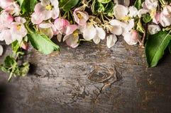 De lentebloemen van fruitbomen op donkere houten achtergrond, hoogste mening Royalty-vrije Stock Fotografie
