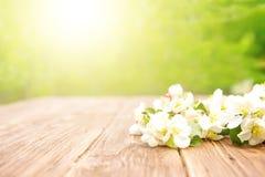De de lentebloemen van tot bloei komende appelboom vertakt zich op rustieke houten lijst over groene tuin stock fotografie