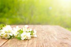 De de lentebloemen van tot bloei komende appelboom vertakt zich op rustieke houten lijst over groene tuin sunbeam royalty-vrije stock afbeelding