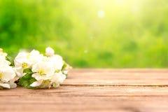 De de lentebloemen van tot bloei komende appelboom vertakt zich op rustieke houten lijst over groene tuin sunbeam stock afbeelding