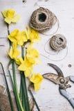 De lentebloemen van tuin royalty-vrije stock foto's