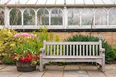 De lentebloemen in vat Royalty-vrije Stock Foto's
