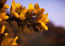 De lentebloemen in Zuid-Engeland stock afbeelding