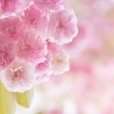 De lentebloesem Royalty-vrije Stock Foto's