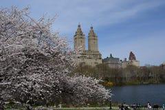 De lentebloesem in Central Park Stock Foto