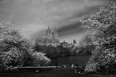 De lentebloesem in Central Park Stock Foto's