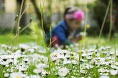 De lentebloesem in het gras Stock Afbeeldingen