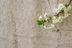 De lentebloesem op rustieke achtergrond stock fotografie