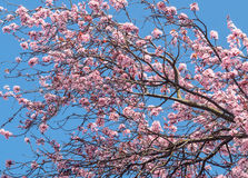 De lentebloesems Royalty-vrije Stock Foto