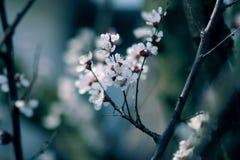 De lentebloesems stock afbeeldingen