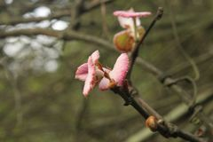 De lentebloesems royalty-vrije stock afbeelding