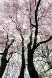 De lentebloesems, de Kastanjebruine Begraafplaats van MT, Boston Stock Fotografie