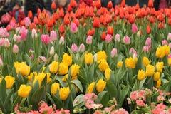 De lentebloesems royalty-vrije stock fotografie