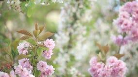 De lentebomen stock footage