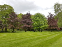 De lentebomen Royalty-vrije Stock Fotografie