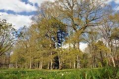 De lentebomen Royalty-vrije Stock Afbeeldingen