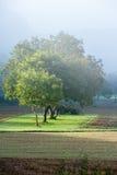 De lentebomen in de mist Royalty-vrije Stock Afbeelding