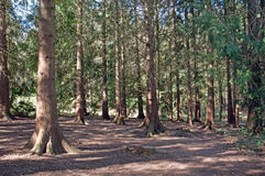 De lentebomen en silhouetten langs een parkweg Royalty-vrije Stock Afbeeldingen