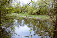 De lentebomen met jonge bladeren en een rivier stock afbeelding