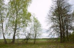 De lentebomen met jonge bladeren stock foto