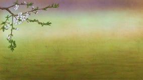 De lenteboom Stock Afbeeldingen