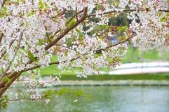 De lenteboom Royalty-vrije Stock Afbeeldingen