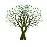 De lenteboom met blad Vector illustratie Royalty-vrije Stock Afbeeldingen