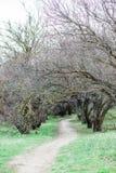 De lentebos, bomen zonder bladeren en groen gras royalty-vrije stock afbeeldingen