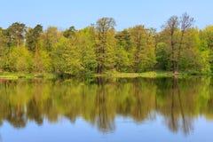 De lentebos in het meer op een zonnige dag wordt weerspiegeld die Stock Foto's