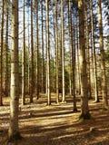 De lentebos in het zonlicht Royalty-vrije Stock Foto