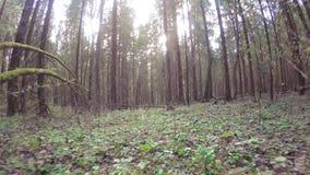 De lentebos met een windscherm stock video