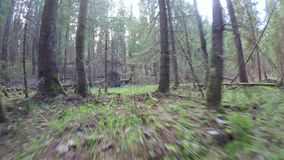 De lentebos met een windscherm stock videobeelden