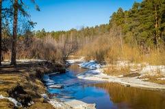 De lentebos op de banken van de rivier, Royalty-vrije Stock Foto's