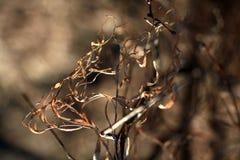 De lentebos zonder bladeren Royalty-vrije Stock Afbeeldingen