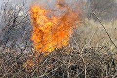 De lentebrand Stock Afbeelding