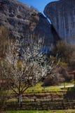 De lentedag, bloeiende tuinen stock afbeelding