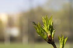 De lentedromen van het insect in de lente Stock Afbeeldingen