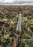 De lentegans de jacht, de jachtgeweer met munitie wordt geladen ligt op een camouflage netto schuilplaats in een graangebied dat stock afbeelding