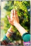 """De lentegebed †die de """"helende bevoegdheden van de lente aanbidden Boom in handen, met kleurenpatroon Royalty-vrije Stock Fotografie"""
