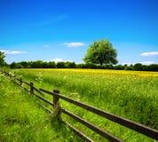 De lentegebied en blauwe hemel Royalty-vrije Stock Foto
