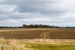 De lentegebied, landbouw Stock Afbeelding