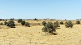 De lentegebied onder blauwe hemel in Larnaca, Cyprus Landelijk landschap van gras en bomen op zonnige dag stock footage