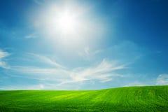De lentegebied van groen gras Blauwe zonnige hemel Royalty-vrije Stock Foto's