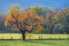 De lentegebladerte, de steeg van het land, Groot Rokerig /mountains Royalty-vrije Stock Afbeelding