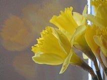 De lentegele narcissen bij het venster Royalty-vrije Stock Foto's